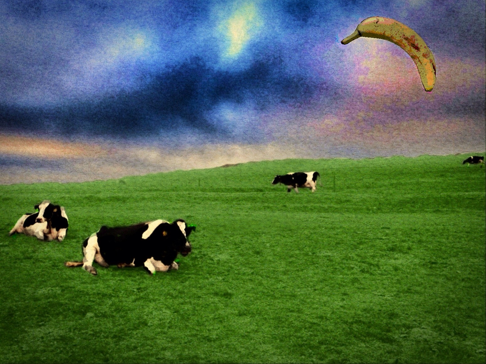 Still-life with cows