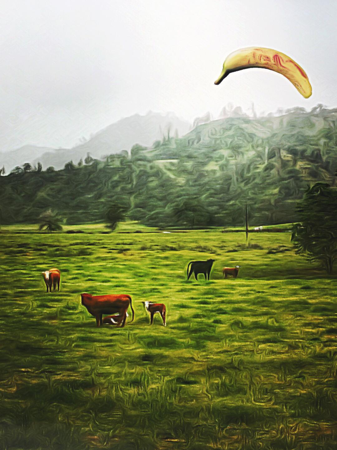 Sun King O'er Elysian Cow Town