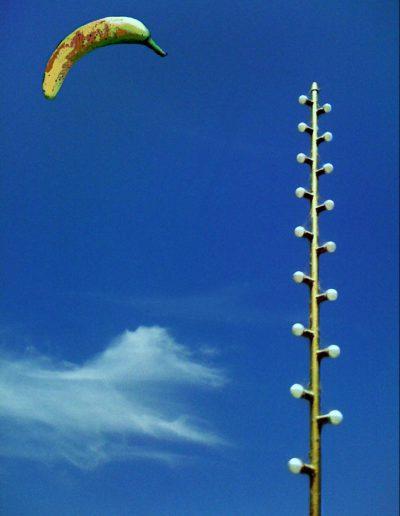 #7 - Sun King Beams Incremental Wisdom To Photonic Light Polyps