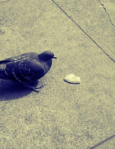 The Bird ... and the cracker