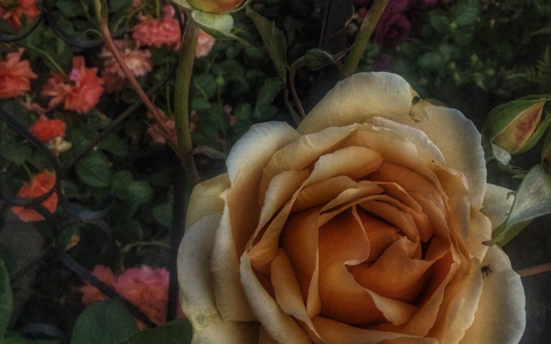 Women, Flowers, It's All Venus