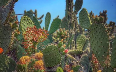 {gallery} Cacti In Berkeley